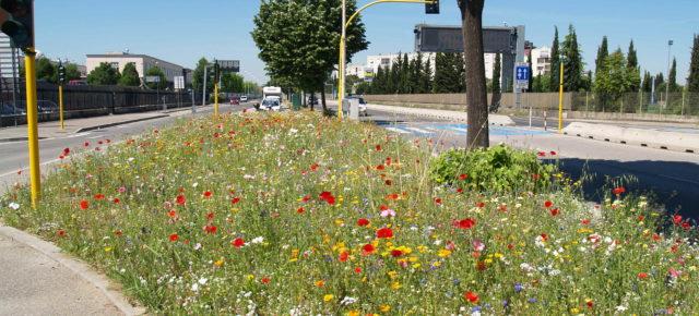 Seminario sobre «Especies herbáceas nativas para el verde público» el 10 de noviembre a las 15:00 horas en la Municipalidad de Itri (LT)