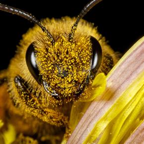 El indispensable retorno a la armonía entre plantas, insectos y personas