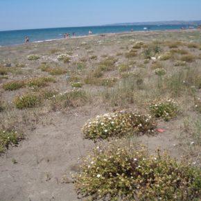 Mesa redonda: El litoral romano, conocer pera conservar