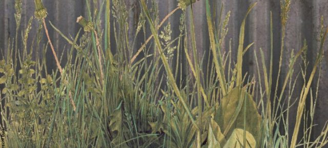 Explorar, comprender y cuidar la vegetación espontánea en Roma Est